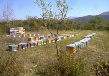 Come iniziare l'attività di apicoltore