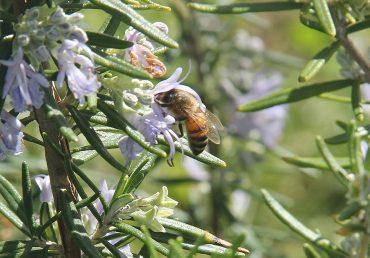 La scelta della colonia d'api